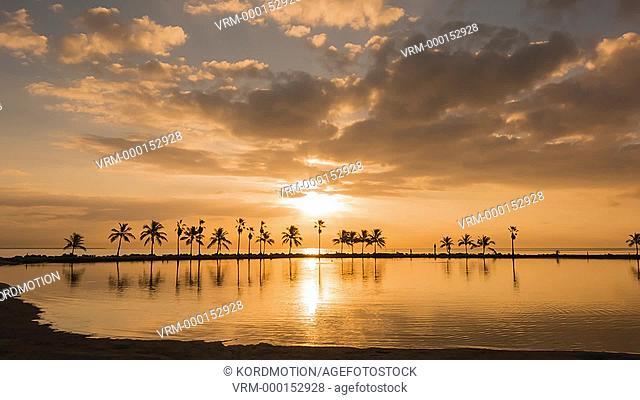 TILT UP PALM TREES REFLECTING POOL ATOLL MATHESON HAMMOCK COUNTY PARK MIAMI FLORIDA USA