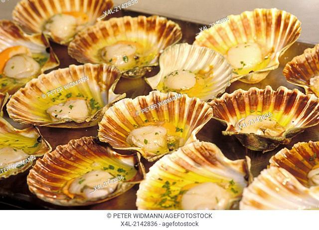 food scallops
