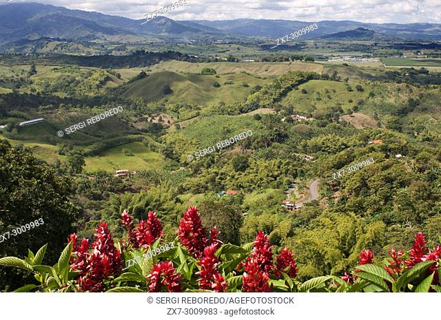 Hacienda San Alberto. Coffee plantations near the town Buenavista. Quindio, Colombia. Colombian coffee growing axis. The Colombian coffee Region