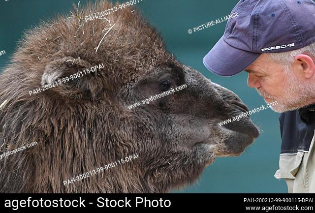"""13 February 2020, Hessen, Frankfurt/Main: The almost one year old Bactrian camel mare """"""""Arya"""""""" approaches her keeper Walter Arlt in the enclosure of Frankfurt..."""