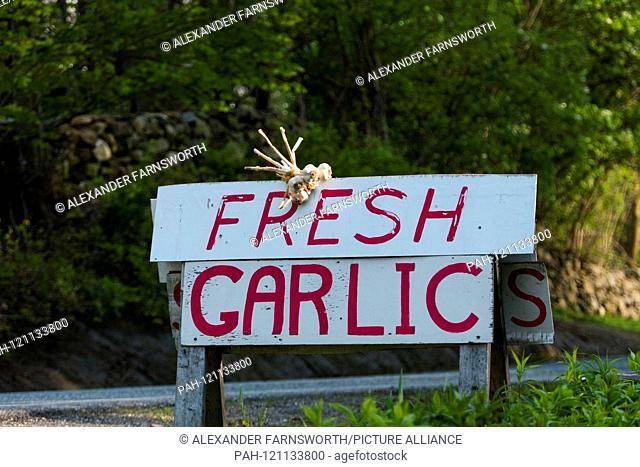 Litchfield, Connecticut, USA Fresh garlic for sale by the side of the road. - 2019 | usage worldwide. - Litchfield/Connecticut/United States of America