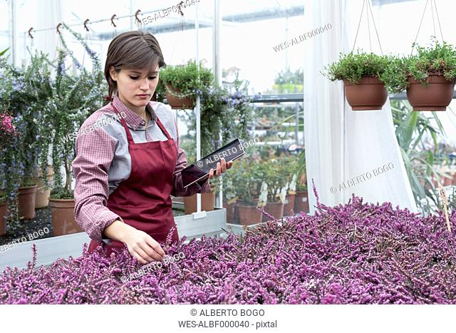 Young female gardener working in greenhouse with tablet pc