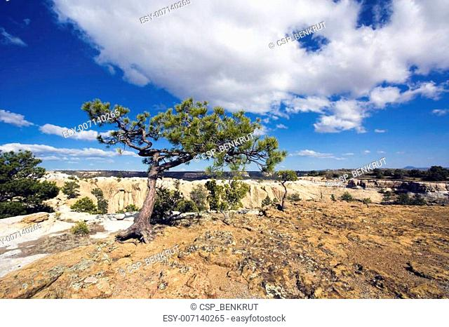 Lonely Tree in El Morro National Monument