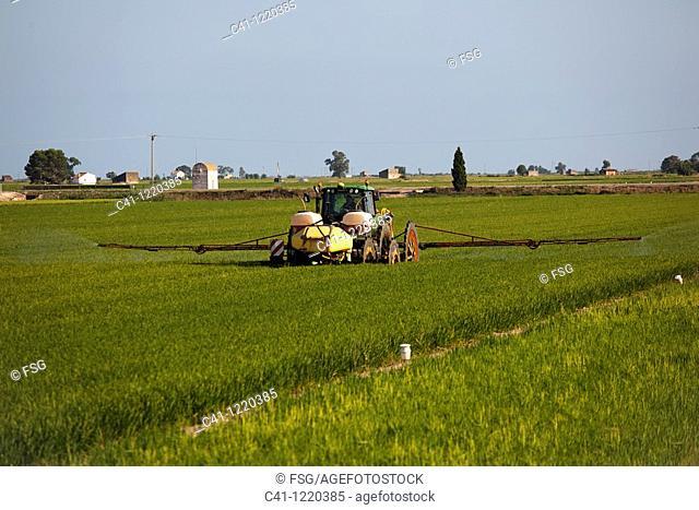Tractor fumigating. Ebro Delta, Tarragona Province, Catalonia, Spain