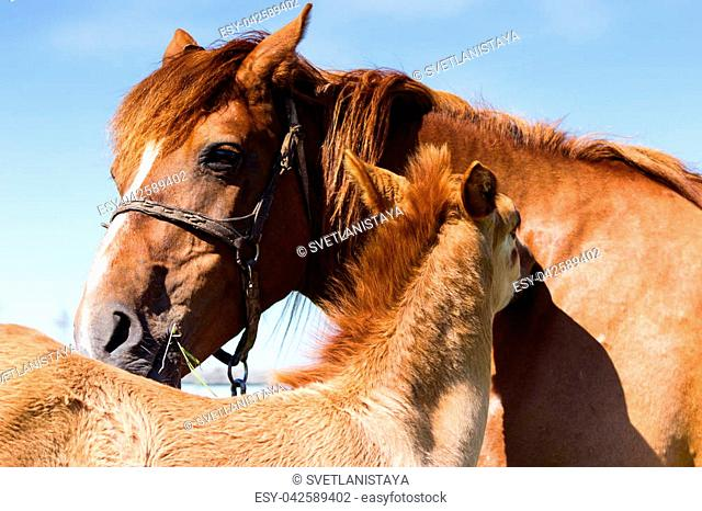Mare with foal combed each other in sunny noon