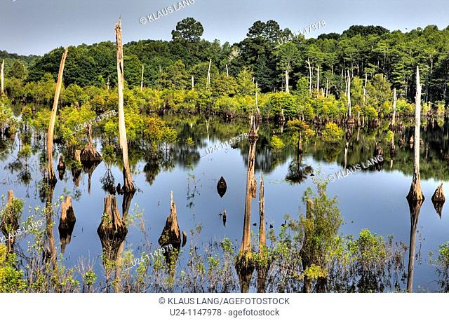 Dead Lakes State Park, Florida