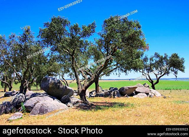 Megalith und Steineichen - Megalith and Holly Oak 03