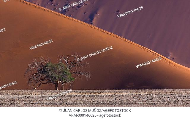 Sand Dunes, Namib Naukluft National Park, Namibia, Africa