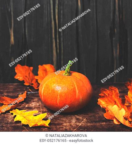Autumn Fall background with pumpkins and golden leaves on rustic wooden background. Happy Thanksgiving Card with copy space