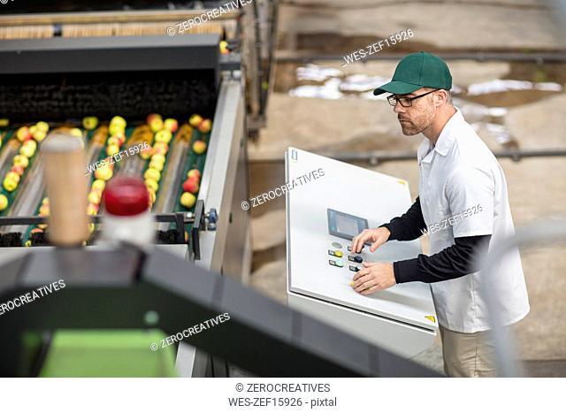 Worker managing apple sorting machine