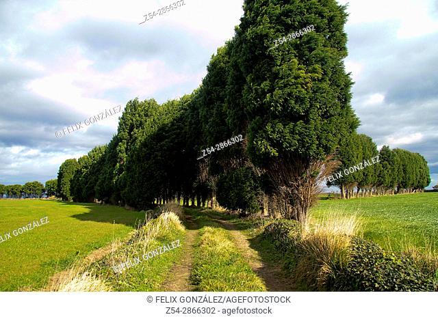 Cypress path at Asturias, Spain