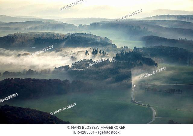Country road through the forest, dense fog, in Nastätten im Taunus, Rhineland-Palatinate, Germany