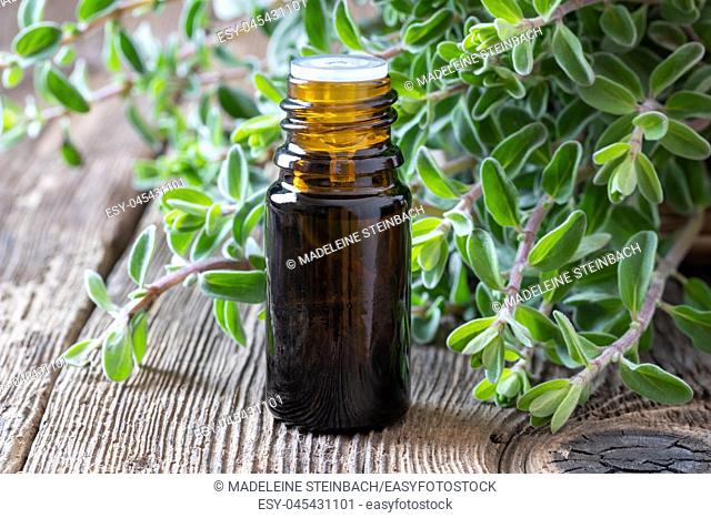 A bottle of essential oil with fresh marjoram twigs
