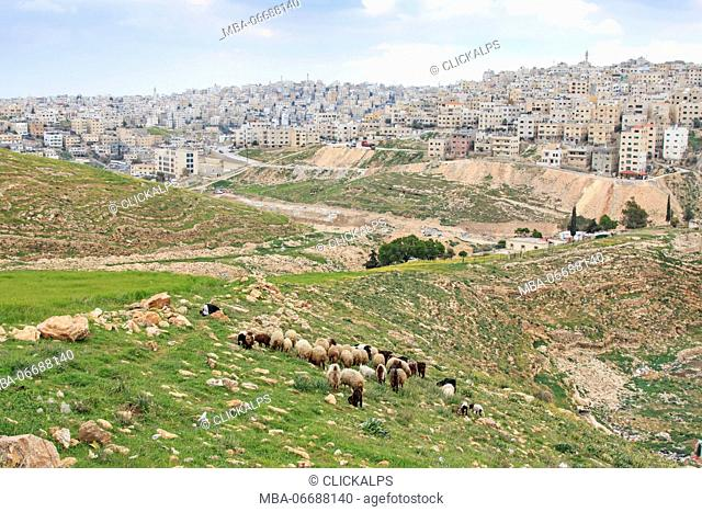 Shepherd enjoying the beautiful view of Amman, the capital of Jordan, from one of the hills nearby