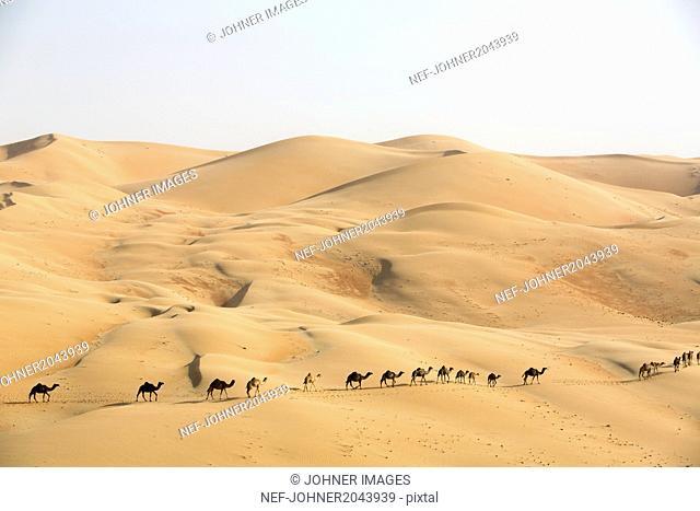Camel caravan on desert