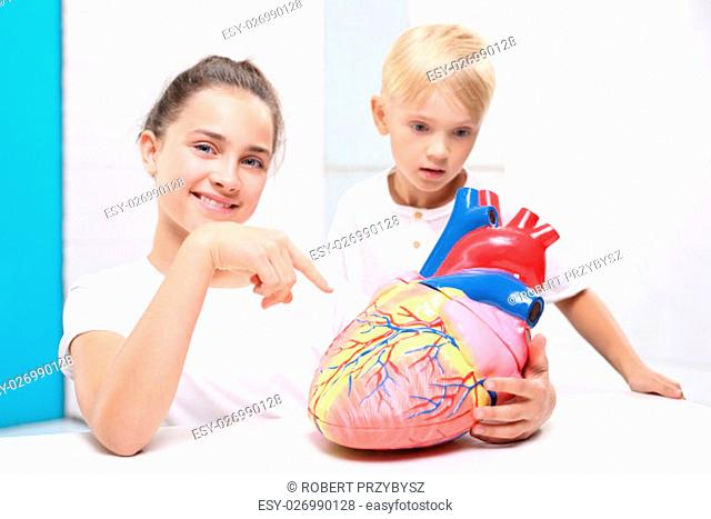 Lekcja anatomii budowa czlowieka. Budowa serca czlowieka. Dzieci ogladaja model ludzkiego serca
