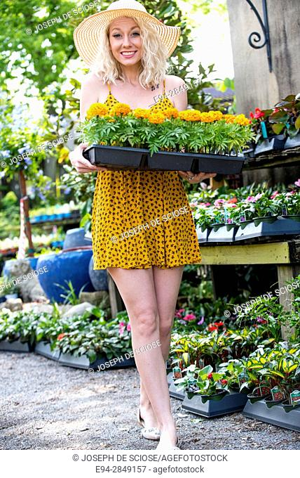 A happy 30 year old blond woman shopping in a plant nursery holding a flat of marigolds