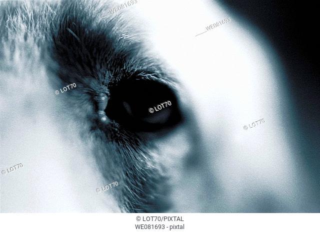 Dog's eye