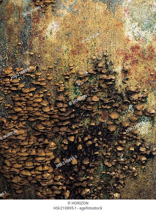 Detail of fungus growing on wood board