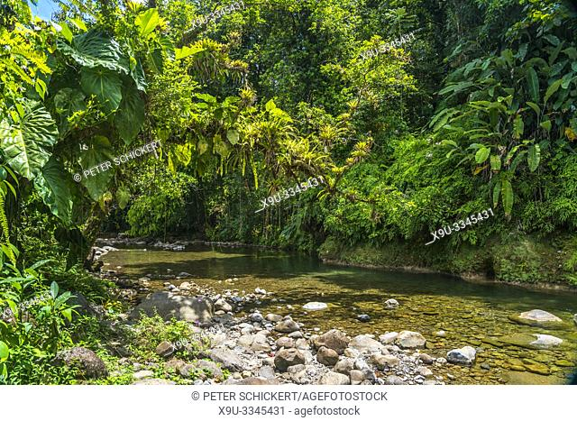 Urwald und Fluss im Nationalpark Guadeloupe, Basse Terre, Guadeloupe, Frankreich | jungle river at Guadeloupe National Park , Basse Terre, Guadeloupe, France