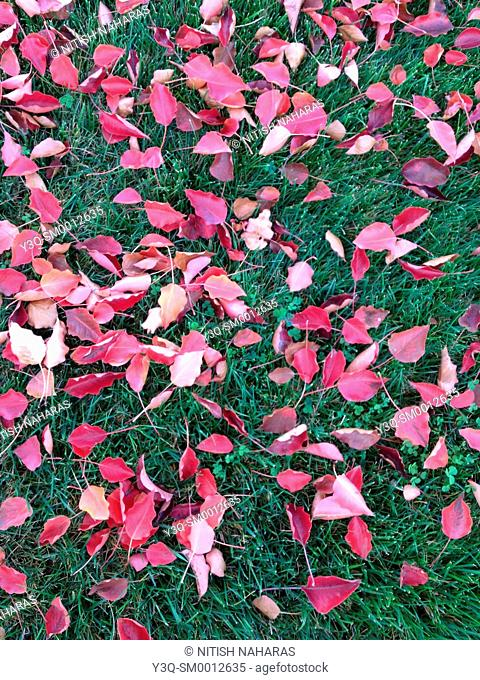 Leaves on the grass in fall season