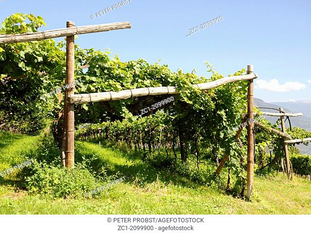 Vineyard at the South Tyrolean wine street near Bolzano - Caution: For the editorial use only. Not for advertising or other commercial use!