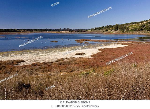 View of saltmarsh, mudflats and estuarine habitat, Elkhorn Slough National Estuarine Research Reserve, California, U S A