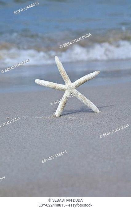 Seastar on a beach,Holidays