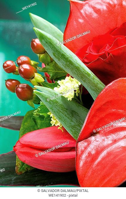 Photography studio, Flashing lights, bouquet of fresh flowers, tulipan, lily, leaves, Girona Town, cataluna, Spain, Europe