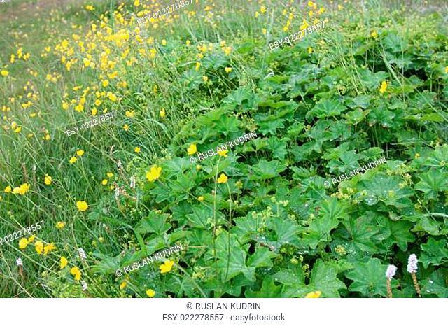 Herb grow