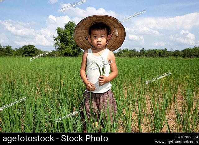 Kind von Thailand am Reisfeld