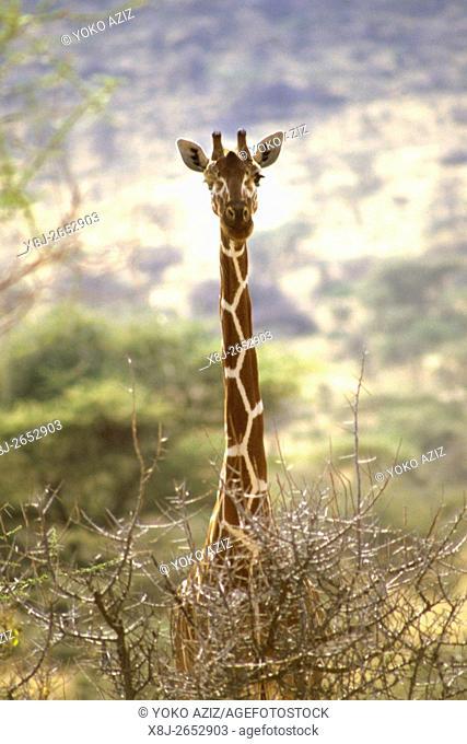 botswana, moremi national park