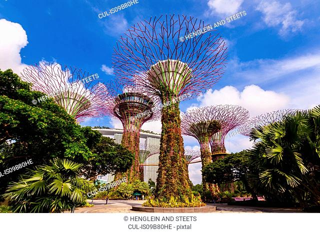 Supertree Grove and gardens, Singapore, South East Asia