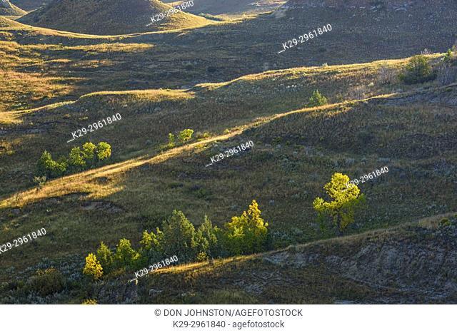 Prairie badlands slopes in late summer, Theodore Roosevelt NP (South Unit), North Dakota, USA