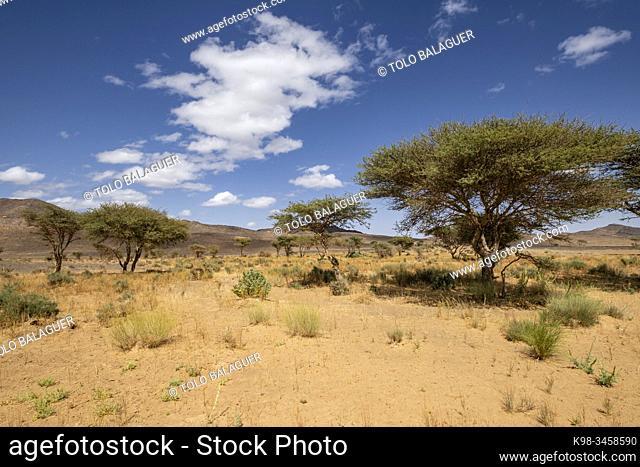 paisaje desertico, Taghrout, Marruecos, Africa